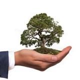 Wo steht der Mittelstand in Sachen Energieeffizienz und Nachhaltigkeit?